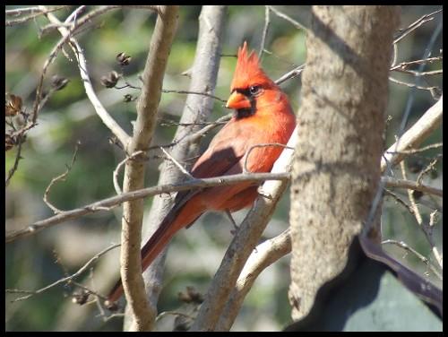 Cardinal Road Trip Part 3