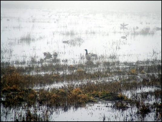 7f1c87905e734ab Birding Field Trip