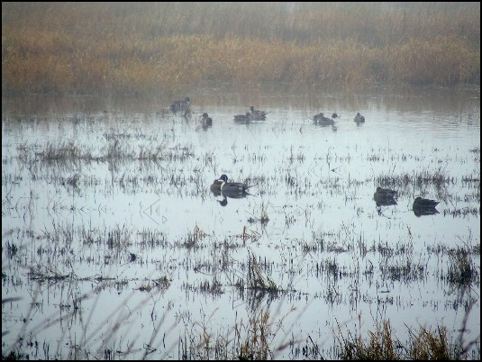 fd5ea59bf8cb053 Birding Field Trip